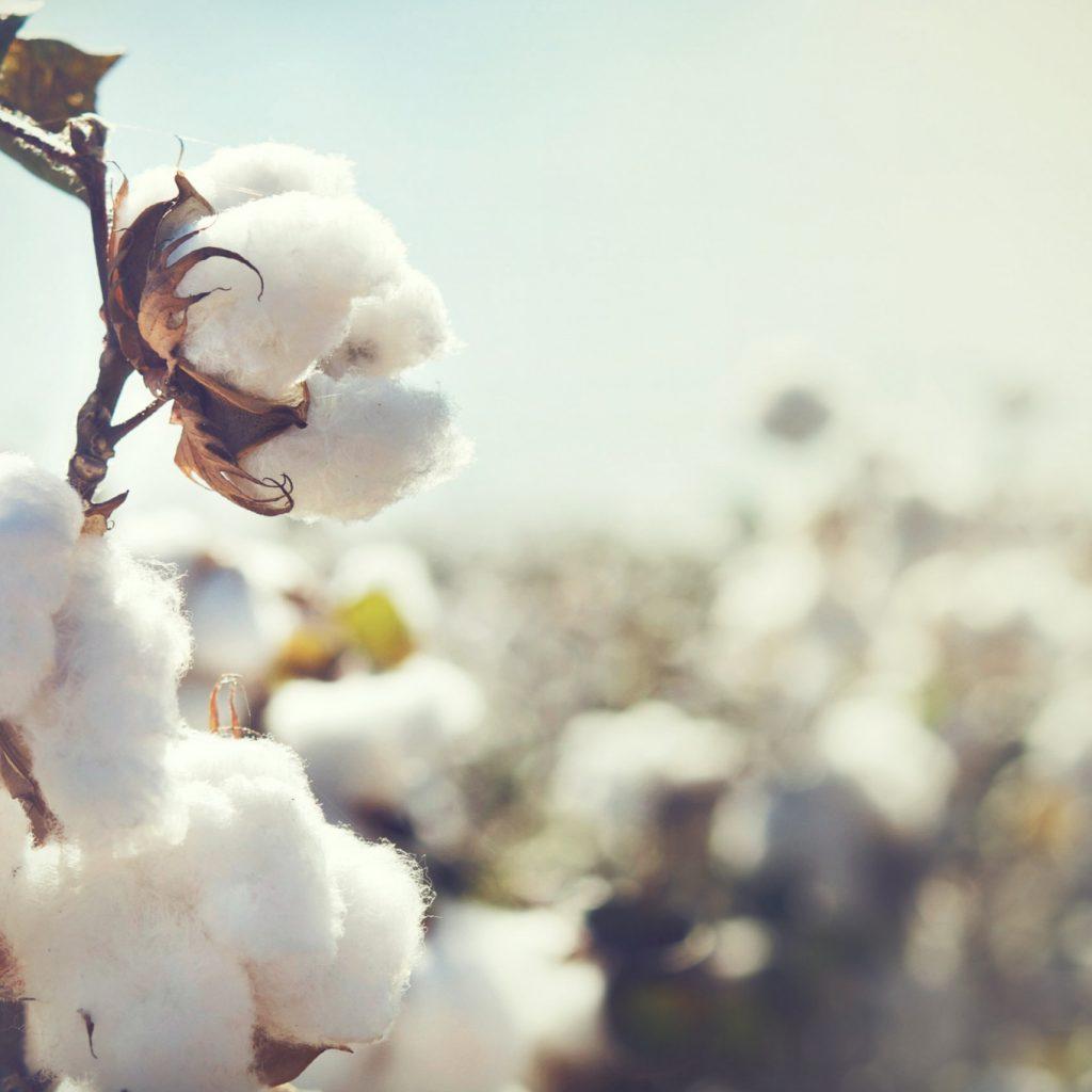 SV Pittie Group to establish $300mn cotton plant in SOHAR Freezone